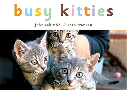 9781582461304: Busy Kitties (A Busy Book)