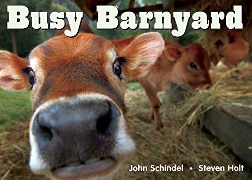 Busy Barnyard (A Busy Book) (1582461686) by John Schindel