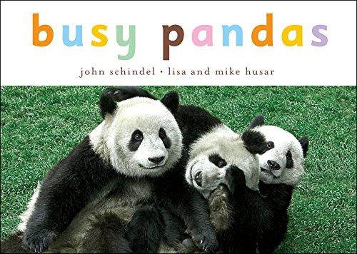 Busy Pandas (A Busy Book) (9781582462592) by John Schindel