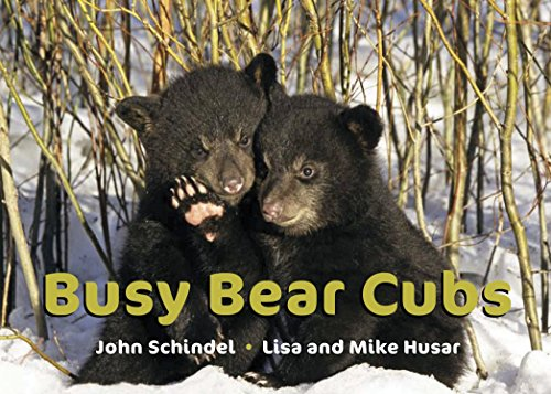 Busy Bear Cubs (A Busy Book) (1582463026) by Schindel, John