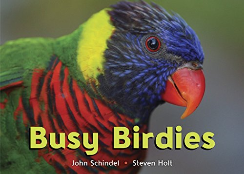 Busy Birdies (A Busy Book) (1582463174) by Schindel, John