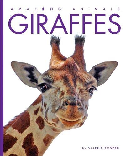 9781583417140: Giraffes (Amazing Animals (Creative Education Hardcover))