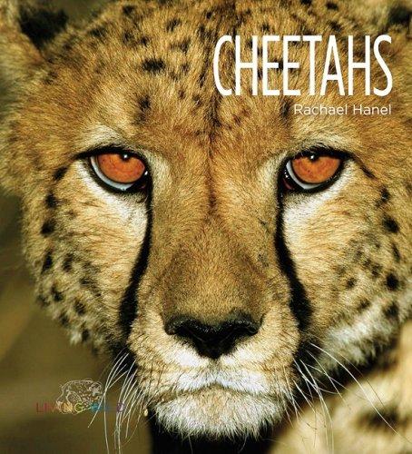 Cheetahs (Living Wild): Rachael Hanel