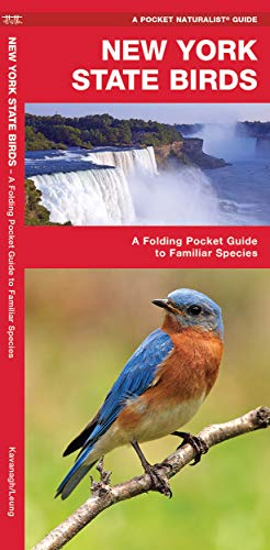 9781583551592: New York State Birds: A Folding Pocket Guide to Familiar Species (A Pocket Naturalist Guide)