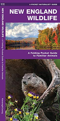 9781583551738: New England Wildlife: A Folding Pocket Guide to Familiar Species (A Pocket Naturalist Guide)