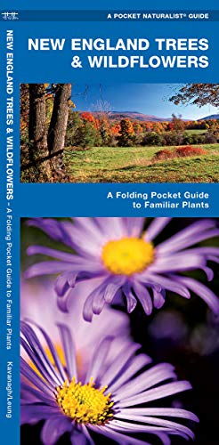 9781583551745: New England Trees & Wildflowers: A Folding Pocket Guide to Familiar Species (A Pocket Naturalist Guide)