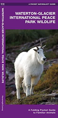 Glacier National Park Wildlife: An Introduction to Familiar Species: Kavanagh, James