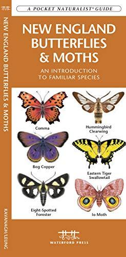 9781583553619: New England Butterflies & Moths: A Folding Pocket Guide to Familiar Species (A Pocket Naturalist Guide)