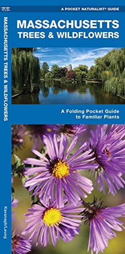 Massachusetts Trees Wildflowers: A Folding Pocket Guide: James Kavanagh