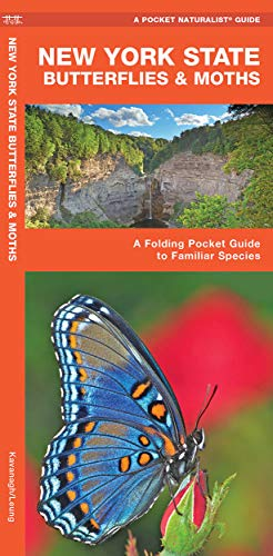 9781583554302: New York State Butterflies & Moths: A Folding Pocket Guide to Familiar Species (Pocket Naturalist Guide Series)