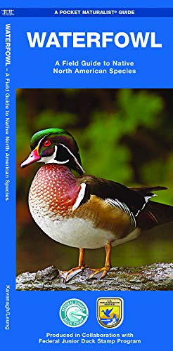 Waterfowl: A Field Guide to Native North American Species (Pocket Naturalist Guide Series): ...