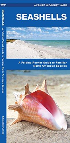 Seashells: A Folding Pocket Guide to Familiar North American Species: Kavanagh, James