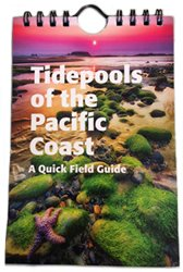 9781583690857: A Quck Field Guide to Tidepools of the Pacific Coast