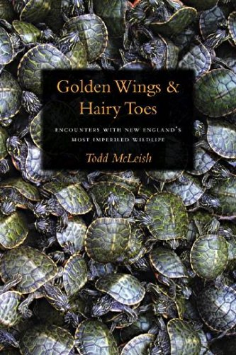 9781584656265: Golden Wings & Hairy Toes: Encounters with New England's Most Imperiled Wildlife