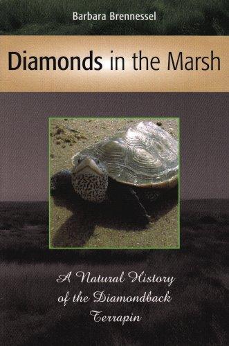 Diamonds in the Marsh: A Natural History of the Diamondback Terrapin: Brennessel, Barbara