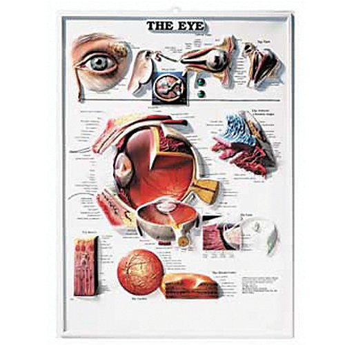9781587791291: The the Eye 3d Raised Relief Chart