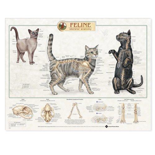 9781587793936: Feline Skeletal System Anatomical Chart