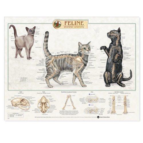 9781587793943: Feline Skeletal System Anatomical Chart
