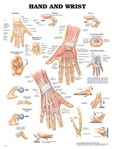 9781587796944: Hand and Wrist Anatomical Chart