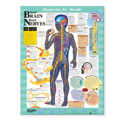 9781587797439: Blueprint for Health Your Brain and Nerves Chart