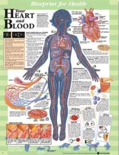 9781587797446: Your Heart and Blood Blueprint Chart (Blueprint for Health)