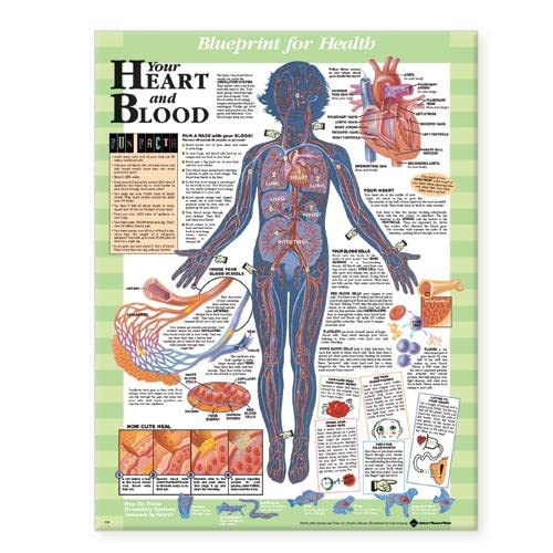Blueprint for Health Your Heart and Blood: Acc