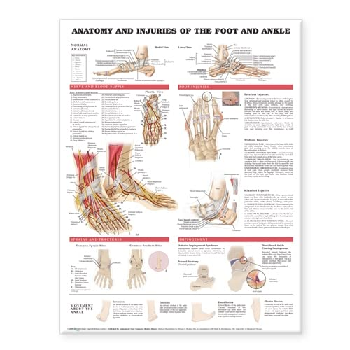 9781587798382: Anatomy and Injuries of the Foot and Ankle