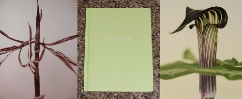 9781590051610: One Picture Book: A. Angustatum