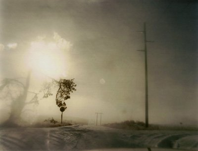 9781590052921: Todd Hido: Crooked Cracked Tree in Fog (One Picture Book #60, with Print)