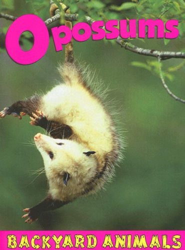 Opossums (Backyard Animals): Christine Webster