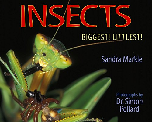 Insects: Biggest! Littlest!: Markle, Sandra