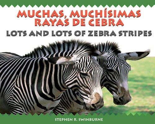 9781590786338: Lots and Lots of Zebra/ Muchas, Muchisimas Rayas De Cebra (English and Spanish Edition)
