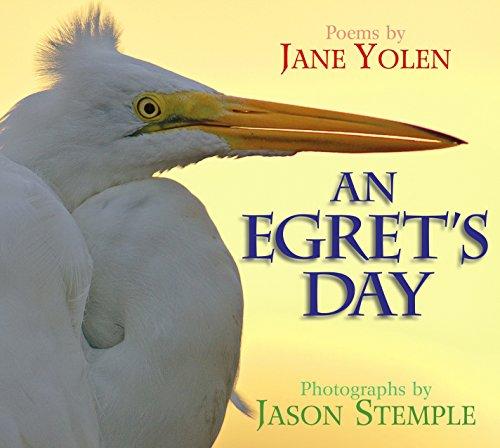 9781590786505: An Egret's Day