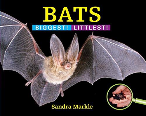 9781590789520: Bats: Biggest! Littlest!