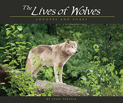 9781591932765: Lives of Wolves, Coyotes and Foxes (Wildlife Appreciation)