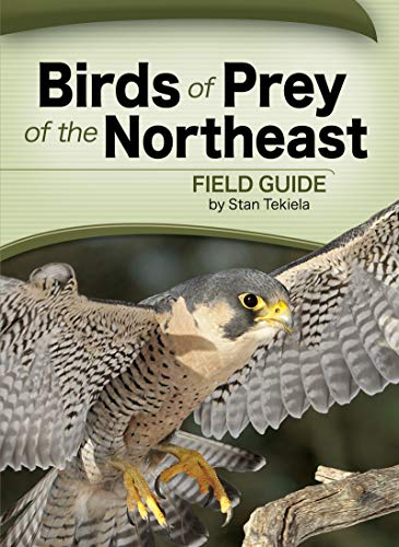 Birds of Prey of the Northeast Field Guide (Paperback)