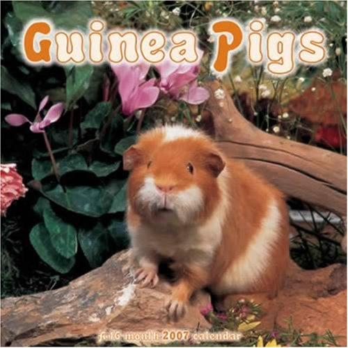 9781592847631: Guinea Pigs 2007 Wall Calendar
