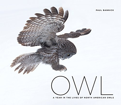 Owl: A Year in the Life of North American Owls (Hardcover): Paul Bannick