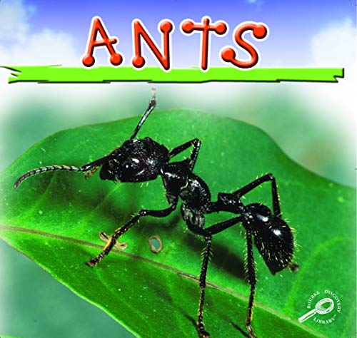 9781595157386: Ants (Insects)