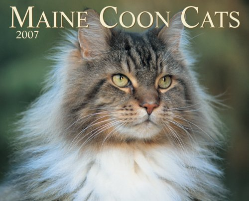 9781595432537: Maine Coon Cats 2007 Calendar