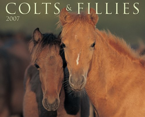 9781595433121: Colts & Fillies 2007 Calendar
