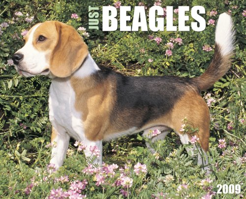 Just Beagles Calendar (Just (Willow Creek))