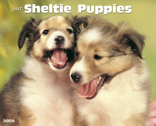 9781595437891: Just Sheltie Puppies Calendar (Just (Willow Creek))