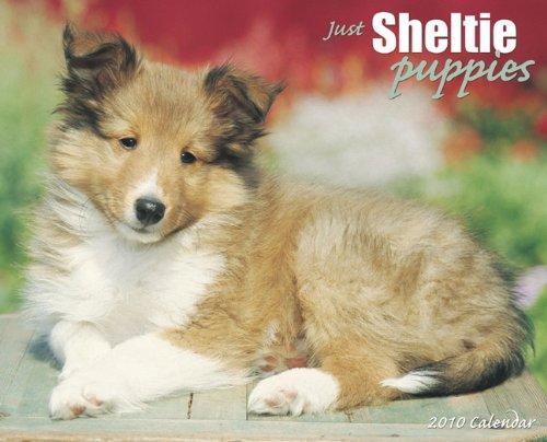 9781595439819: Just Sheltie Puppies Calendar