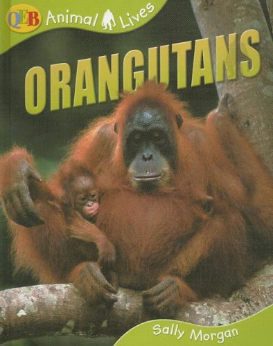 9781595662040: Orangutans (Qeb Animal Lives)