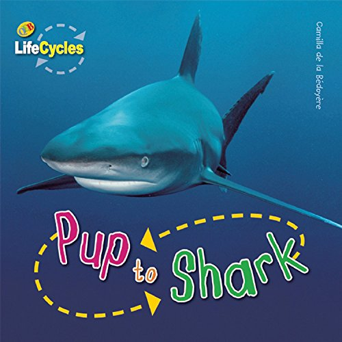 Pup to Shark (LifeCycles): de la Bedoyere, Camilla