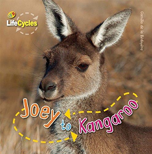 9781595667403: Joey to Kangaroo (QEB Life Cycles)