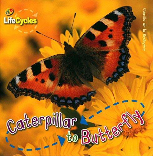 9781595667953: Lifecycles 6-Pack Set: Caterpillar to Butterfly; Egg to Chicken; Joey to Kangaroo; Pup to Shark; See