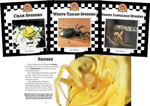 Spiders Set 2: Checkerboard Animal Library Anniversary Edition (1596792914) by Jill C Wheeler