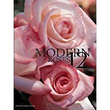 Modern Roses 12